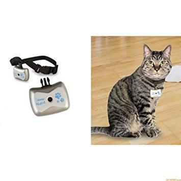 camera espion pour chat