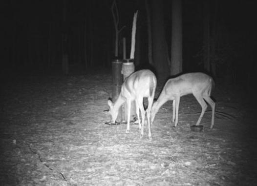 camera vision nocturne chasse