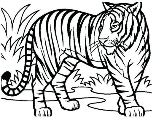 coloriage tigre blanc