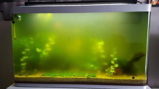 filtre uv aquarium avis
