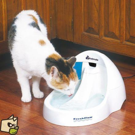 fontaine a eau pour chat a pile