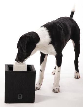 fontaine eau chien
