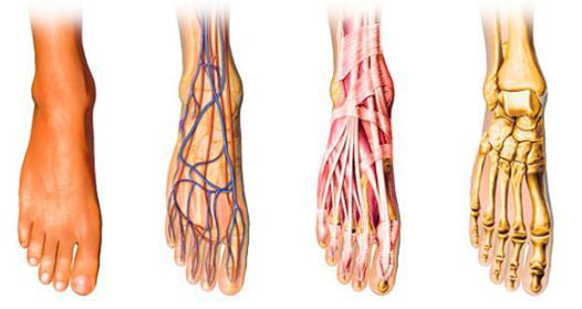 améliorer circulation sanguine pieds