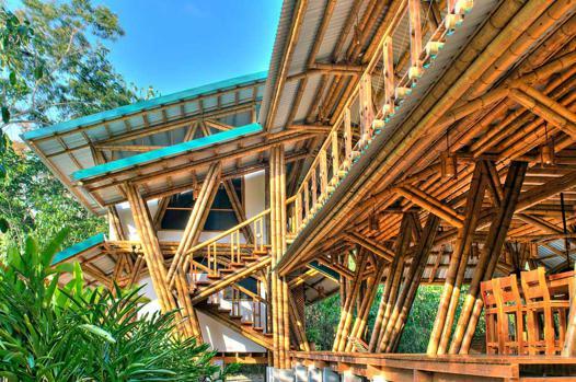 bambou casa