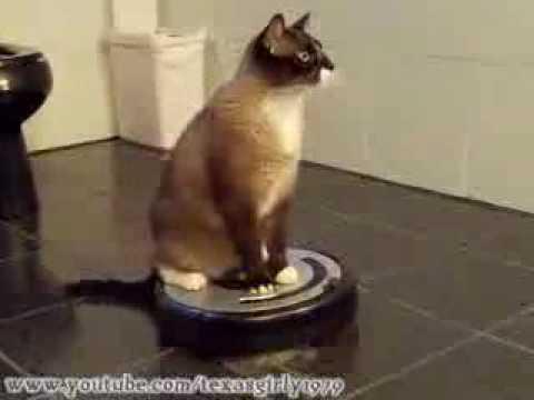 chat aspirateur