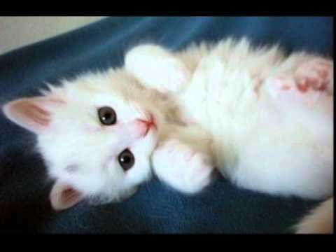 chat drôle et mignon