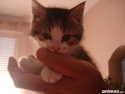 chaton a donner 72