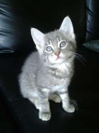 chaton a donner 86