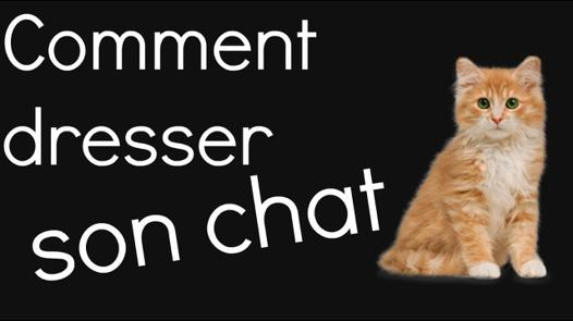 comment dresser son chat