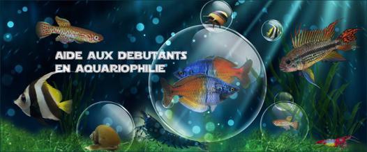 conseil aquariophilie
