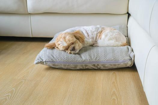 coussin chauffant chien