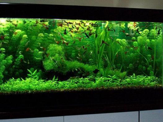 d un aquarium