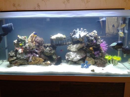 décor pour aquarium