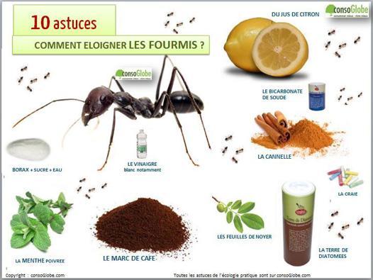 faire fuir les fourmis