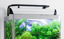 lampe d'aquarium