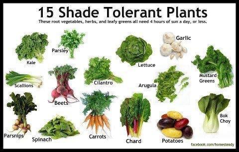 légumes d'ombre