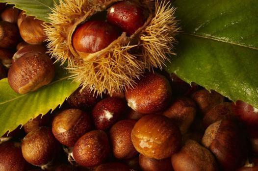 les bienfaits du marron