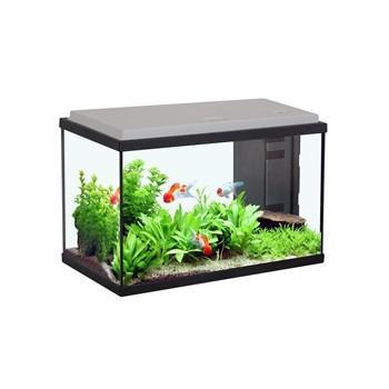 magasin vert aquarium