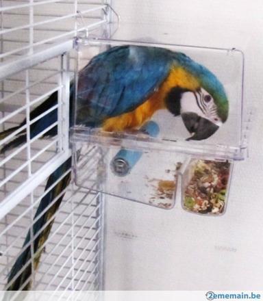 mangeoire perroquet