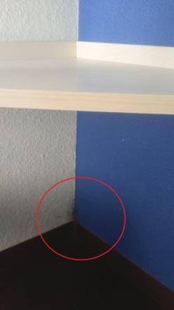moisissure en bas des murs