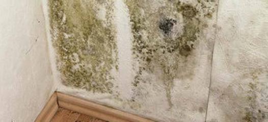 nettoyer des moisissures sur un mur