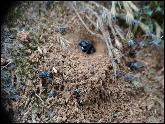 nid de mouche