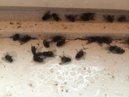 nid de mouches