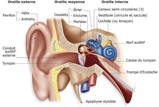 oreille bouché