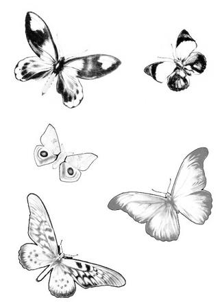 papillon en vol dessin