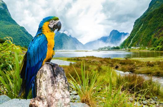 perroquet hd