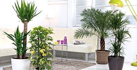 plante de maison intérieur
