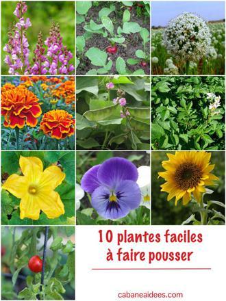 plante facile à faire pousser