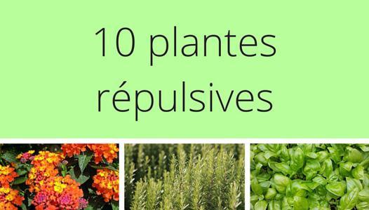 plante répulsive chat
