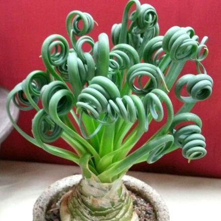 plantes d'intérieur originales fleurs rares