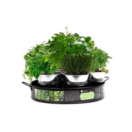 plateau de 7 aromates à cultiver