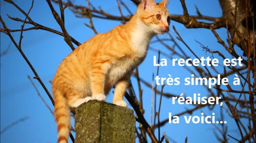 repousse chat naturel