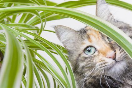 repulsif chat pour plante verte