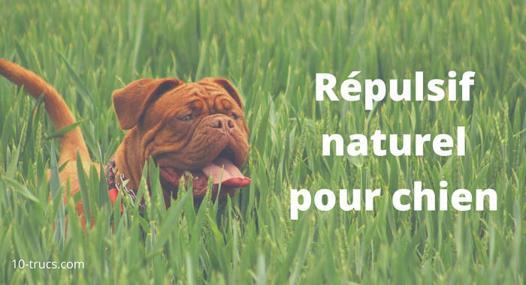 repulsif pour chien naturel