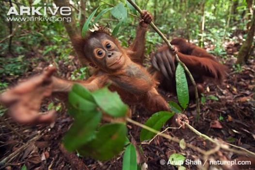 roue orangatang