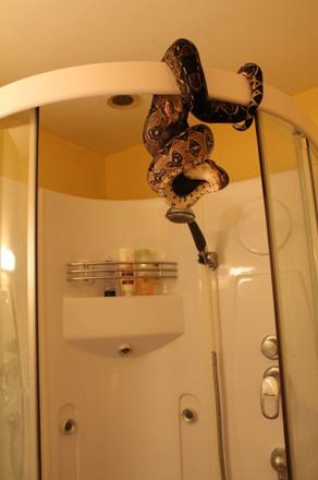 serpent dans la douche