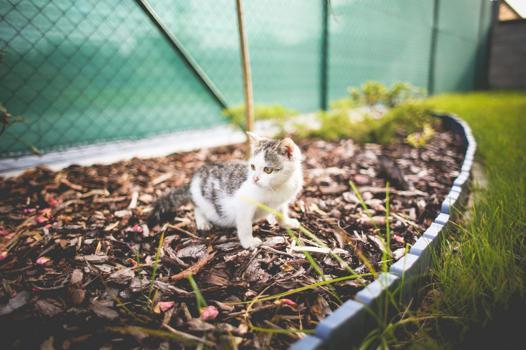 solution pour eloigner les chats du jardin