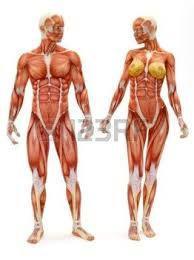 squelette homme et femme