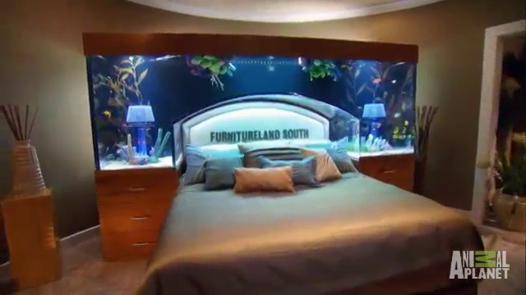 tete de lit aquarium