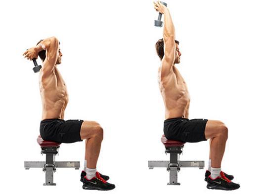 triceps haltere
